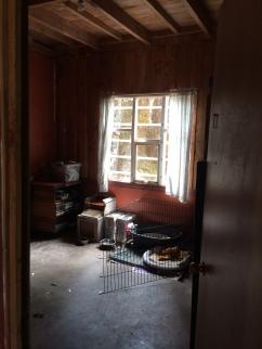 Entering room, broken window & needs new curtains.